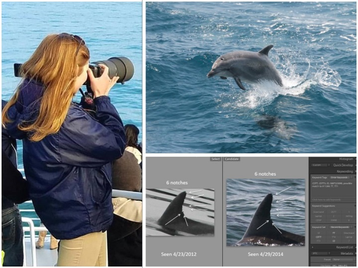 Woman taking photograph, dolphin coming out of water, and analysis of an image
