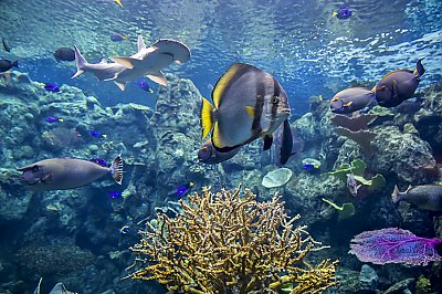 Bonnethead and fish in tropical reef - thumbnail